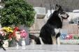 One Argentinian dog has spent the past six year's proving he's a man's best friend, even though that man is dead.          Capitán, a mutt who is some parts German Shepard, disappeared from his home in the small town of Villa Carlos Paz in the center of Argentina following the death of his owner, Miguel Guzmán, in March of 2006.