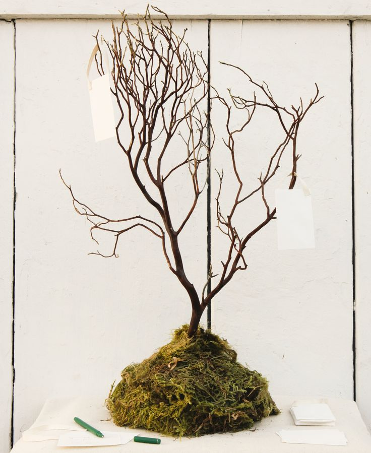 Rustic Pine Toung And Groove Interior Design: DIY Rustic Wedding Wish Tree