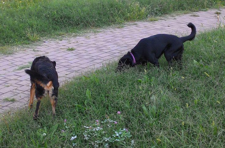 06/09/2015 - Torino con Ollie