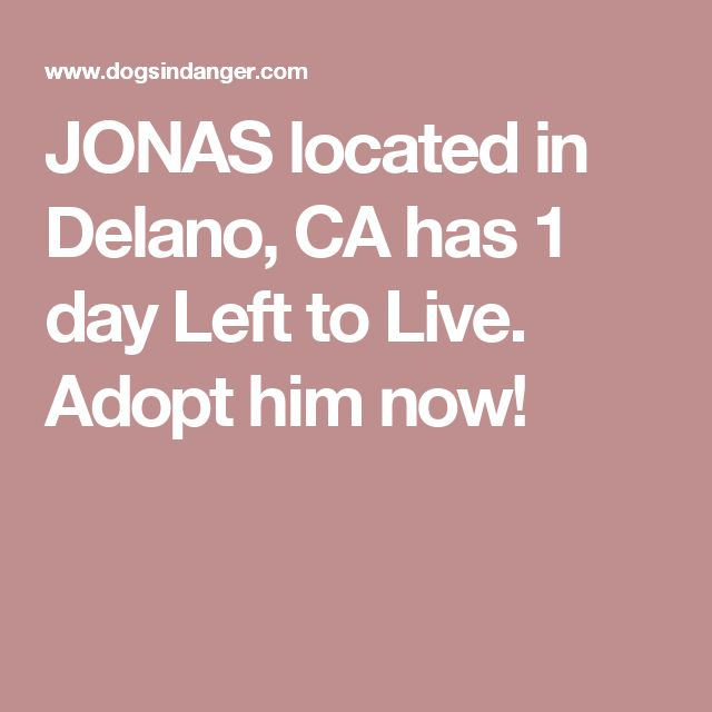 JONAS located in Delano, CA  has 1 day Left to Live. Adopt him now!