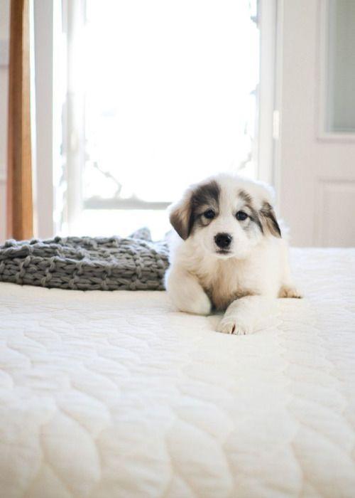 Gray & White + Puppy