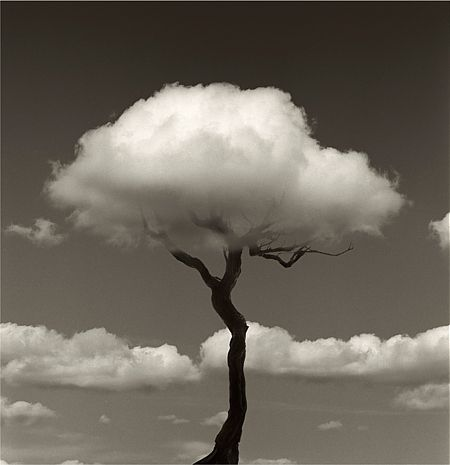 tree (by Chema Madoz)