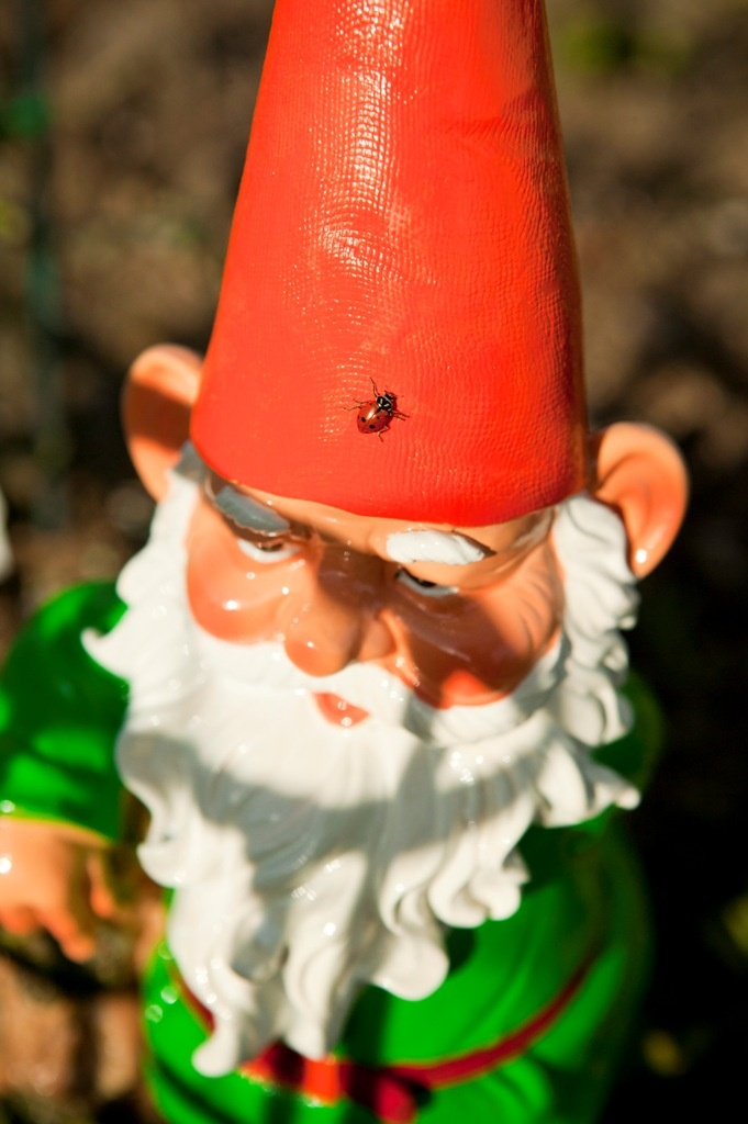 1000 images about garden gnomes on pinterest vintage - Olive garden interview questions ...