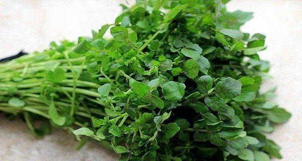 Számos szakértő úgy gondolja a világ minden tájáról, hogy valószínűleg ez a legegészségesebb zöldség a világon - és sajnos mostanában teljesen...