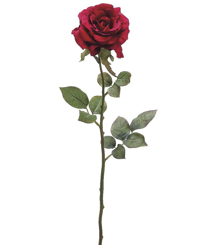 Flower Name: Rose Height: 28inches tall Color: Wine                                                                                                                                                                                 More