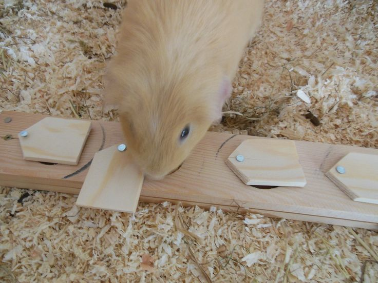 Self-made food board (brain teaser) for guinea pigs.                                                                                                                                                                                 More