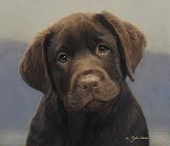 My first Lab was chocolate...Cheyenne. She had green eyes and was so beautiful!