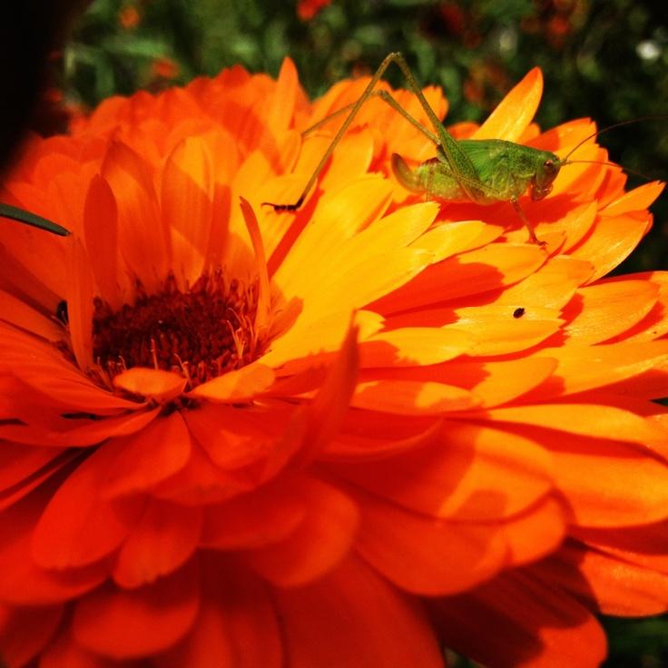 Orange flower. Happy happy