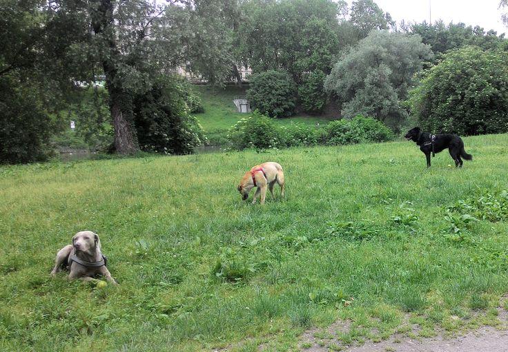 16/05/2016 - Torino con Petit e Peja