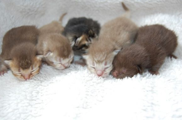 a bunch of adorable newborn kittensTap the link to check out great cat products we have for your little feline friend!