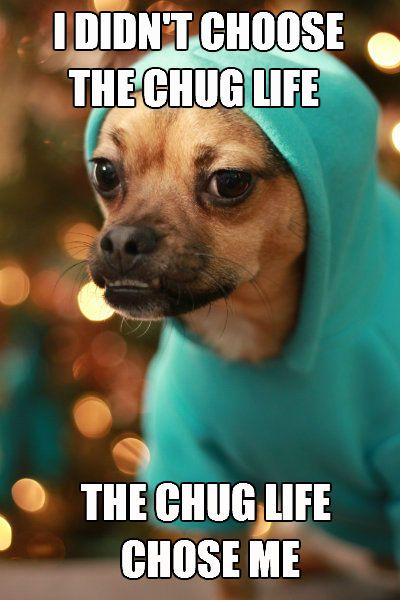 Minion the chug. Not enough chug love out there. I've wanted to do this meme since he first got this hoodie.