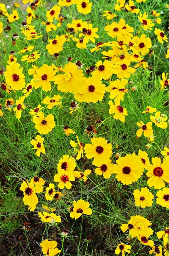 blooming flowers haverhill