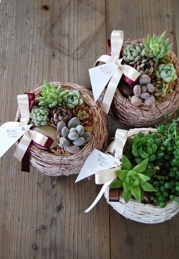 Succulents from your garden, presented planted in a twig nest....What a beautiful hostess gift!: