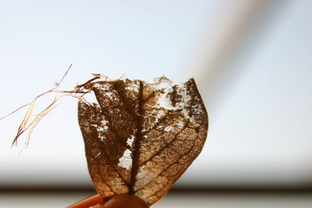 Photographic inspiration for 'life in a leaf' cushion.