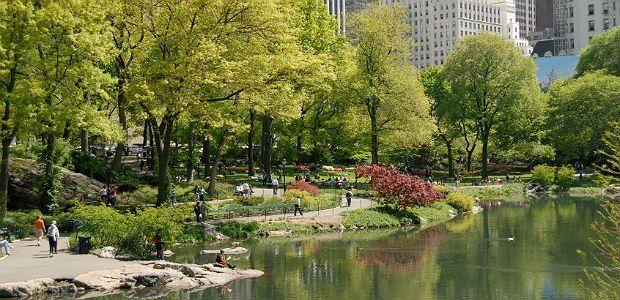 Maior metrópole do mundo, com mais de oito milhões de habitantes, Nova York (EUA) precisava de um programa de reflorestamento urbano para reduzir as emissõ