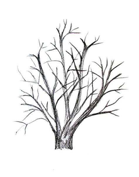 How To Draw A Tree Tutorial Drawing Ideas Pencil Cute Drawings