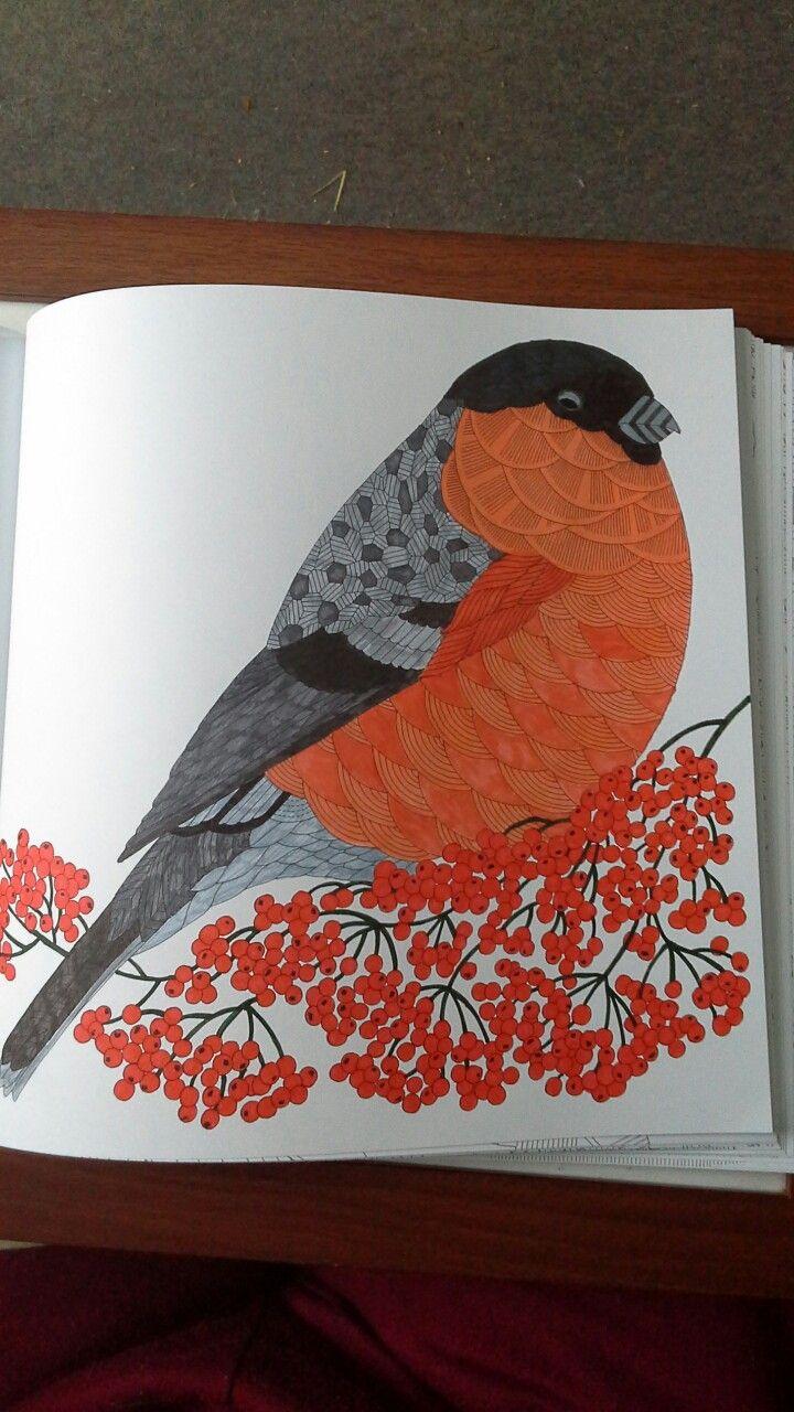 Mr bullfinch from Millie Marotta's beautiful birds and treetop treasures.