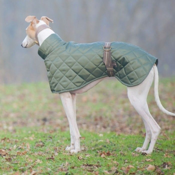 Redhound+for+Dogs+Greyhound+and+Whippet+Quilted+Dog+Coat+Green, £39.50