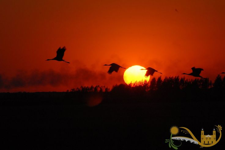 Hortobagy - Crane migration