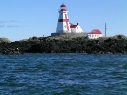 Downeast Charter Boat Tours