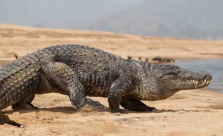 A ground of Gharials and Tigers with its pristine beauty of nature welcomes to the world of flora and fauna, micro organisms and wonderful zone of Fleming Red flowers of Genwa for a fascinating trekking experience in the long gorge of Satkosia Basipalli Wildlife Sanctuary, Orissa. http://www.zeropoint.co.in/