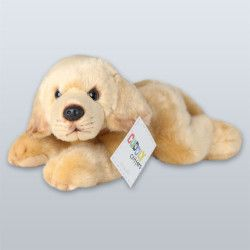Guide Dogs Queensland 'Bailey' Puppy
