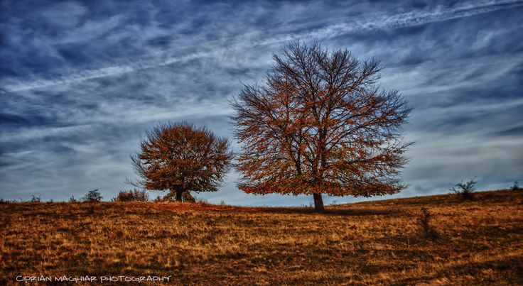 Late autumn by Ciprian Maghiar on 500px