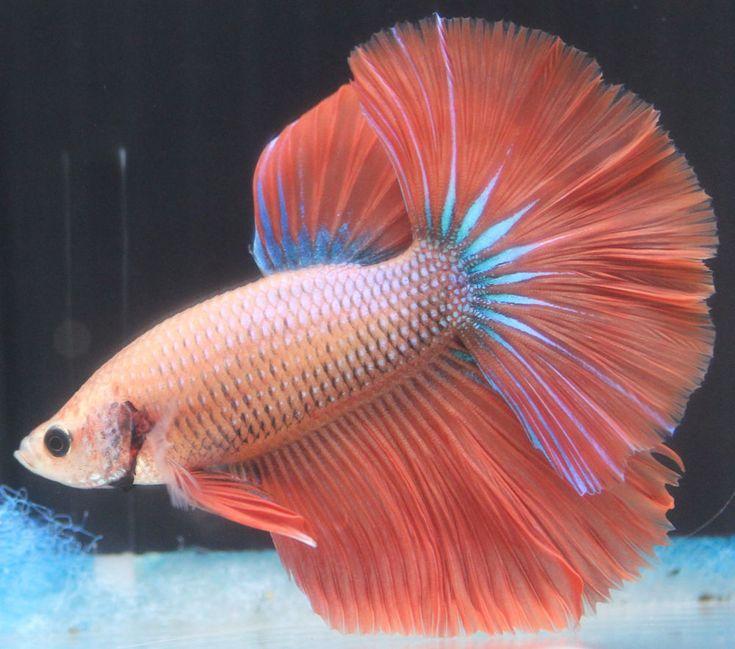 169 best Critters images on Pinterest   Aquarium fish, Aquarius and ...
