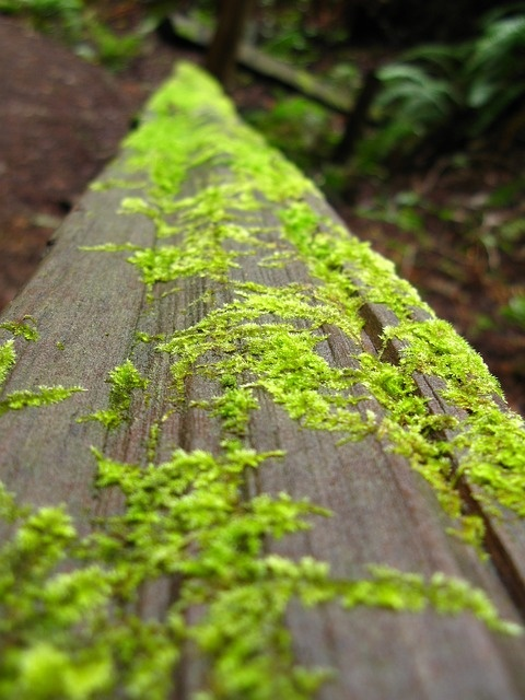 Sammalta puulla. Moss covered wood.