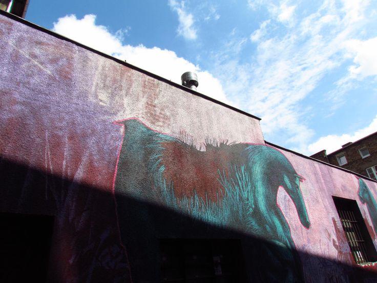 pędzą konie po betonie... dziedziniec - wejście od ul. św. Wojciecha