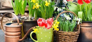 Impressive flower creations for home at spring!!!!!                                                      By eleanan kapokaki.interior architect.
