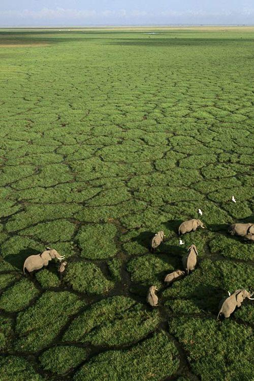 Okavango Delta, #Botswana - Scoprite l'offerta dedicata Facebook, sconto di € 100 per prenotazioni entro il 30 aprile! - http://www.africanexplorer.com/iter.php?id=2=Botswana
