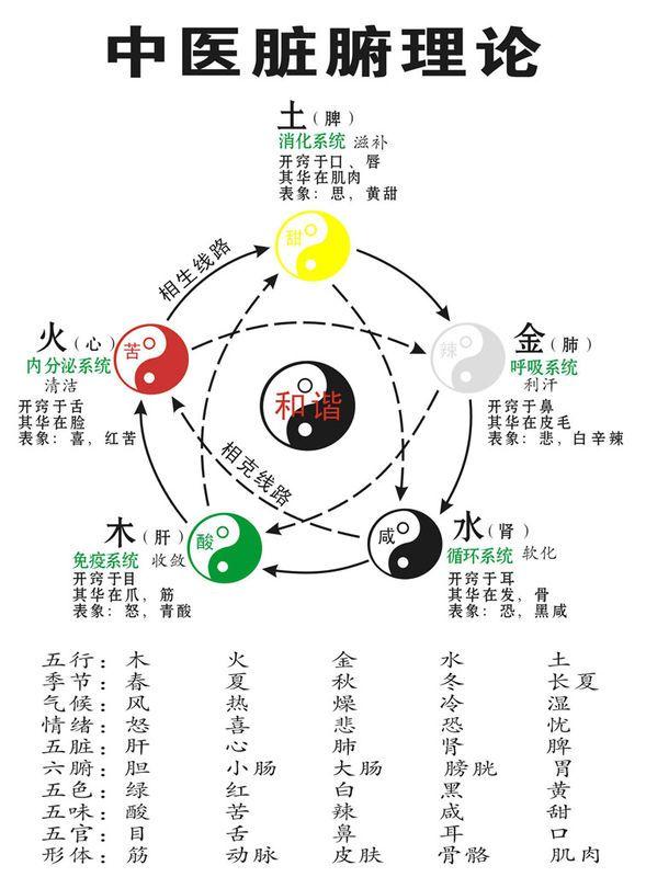 中医理论基础 五行学说 文化中国 永贞堂 Health Knowledge Traditional Chinese Medicine Chinese Medicine