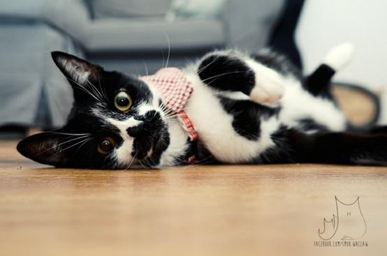 Beci #cat
