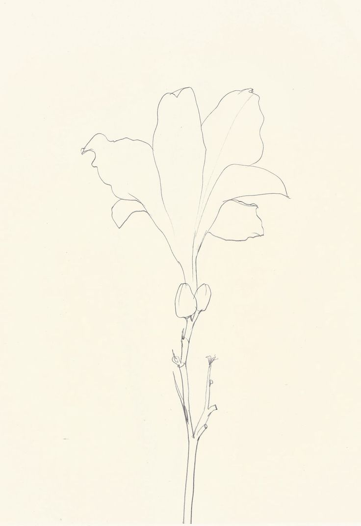 Contour Line Drawing Of A Plant : Best images about varied line contour drawing on
