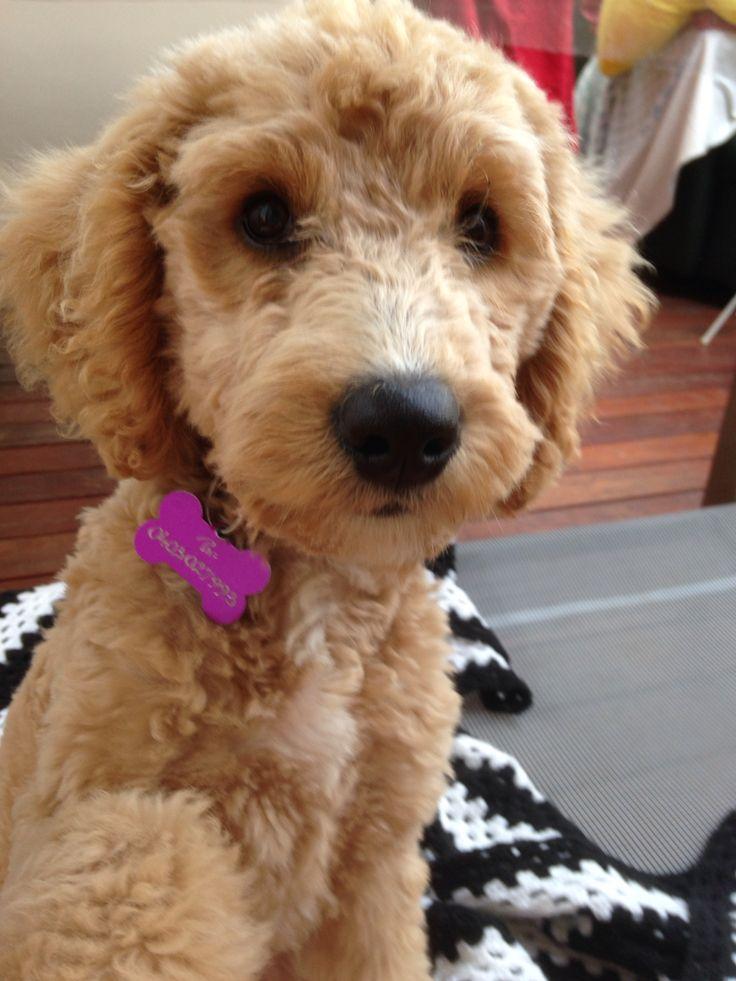 She has little puppy eyes