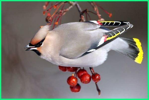 Burung Paling Indah Setiap Orang Memiliki Selera Tersendiri Burung Cantik Burung Binatang