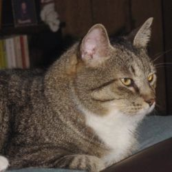 OC is one handsome tabby cat whose origins are unknown. He has been blessed numerous times though, and now lives with me. I don't know much about...