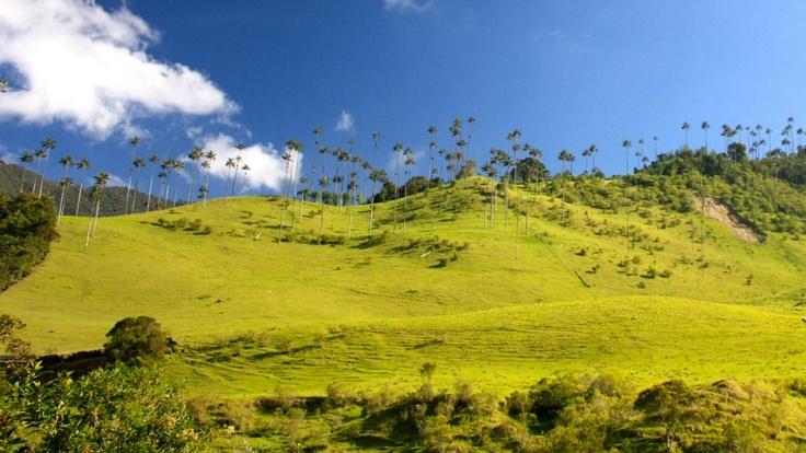 Cocora Valley- Quindio, Colombia