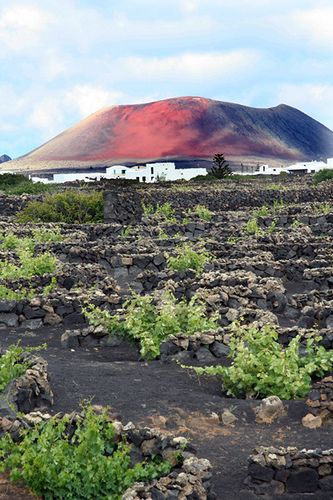 Spain, Canary Islands, Lanzarote, La Geria Vineyards