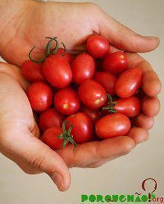 Veja aqui o passo a passo de como plantar tomatinhos em casa. Você vai ver: os tomatinhos são fáceis de cultivar em qualquer lugar!