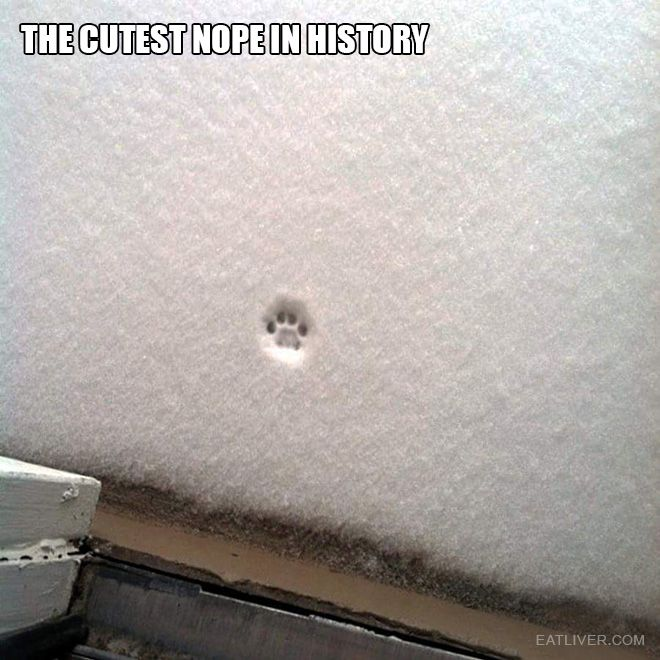The funniest thing you'll see today.>I cant wait for Kaia's first snow. I'm sure it will be like this