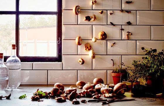 Tør svampe et tørt og køligt sted, og opbevar dem i en lufttæt beholder. De kan holde i flere måneder.