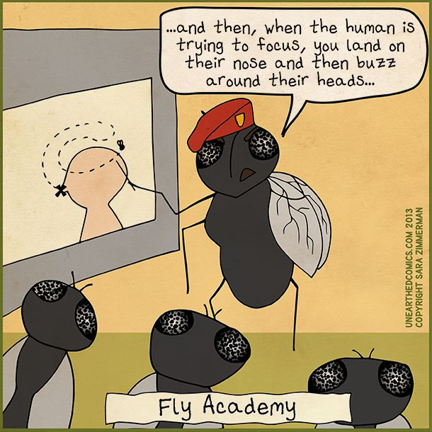 Fly academy- where annoying flies graduate from by Unearthed Comics  #webcomics   #insect #humor