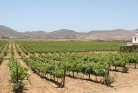 Mexican wines and wineries from Mexico: Ruta del Vino:  Build and They Will Drink