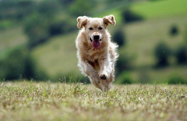 Na psim tropie: Psy szukające trufli