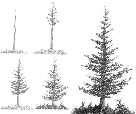 tree coniferous drawing tutorial - Google Search