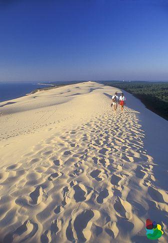 La Dune du Pila , hauteur: entre 110 m et 117 m sur une longueur d'environ 3 kms. La plus grande dune d'Europe - Bassin d'Arcachon - France
