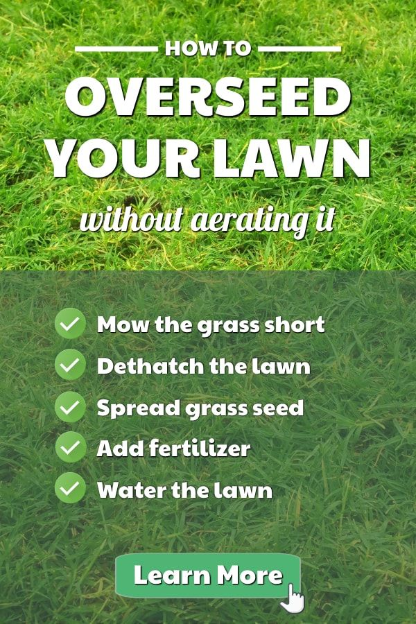 Why You Should Aerate Your Lawn Aerate Lawn Lush Lawn Diy Lawn