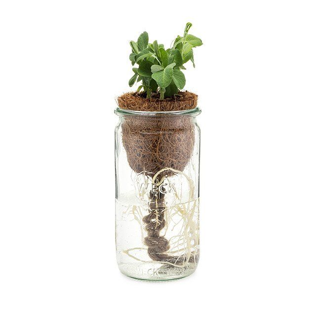 Grow Your Own Herbal Tea Kit Self Watering Garden Herbal Tea Garden Herbalism Seed Starter Kit